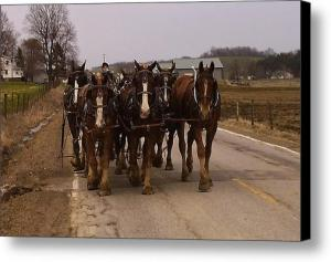Clydesdale Amish Plow Team